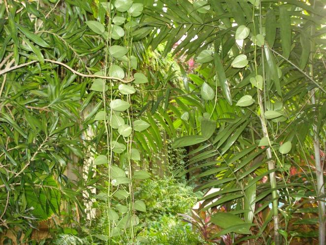 Plantas tropiaclesTuenfermeranatural